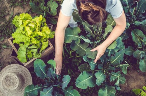 Here's What to Eat to Boost Your Health and Help the Environment