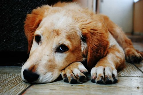 Does your pet need food stamps? Resources for pet care when you can't afford it