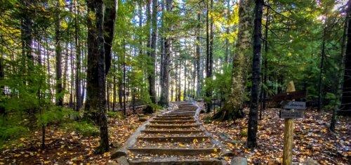 Shinrin-Yoku- The Restorative Power of Forest Bathing