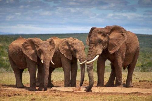 Safari : histoires d'éléphants (et les meilleurs endroits pour en voir)
