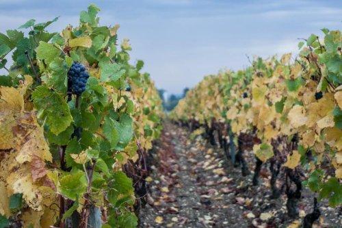 La Bourgogne de ville en vigne