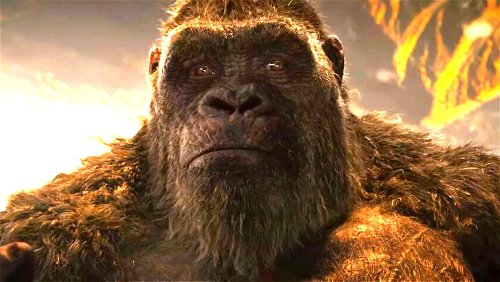 Rules King Kong Has To Follow In Every Movie