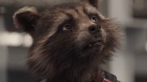 The Real Reason Rocket Raccoon Wears A Scarf In Avengers: Endgame