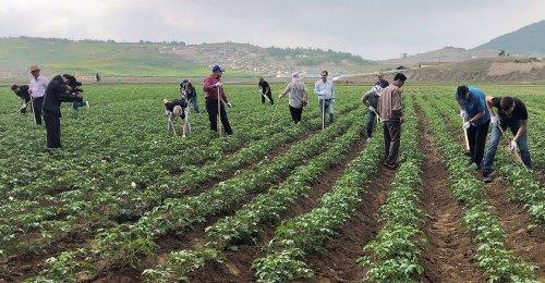 Le spectre d'une nouvelle crise alimentaire resurgit en Corée du Nord