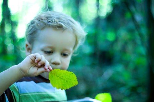 Vivência sensorial convida crianças para (re)imaginar a natureza