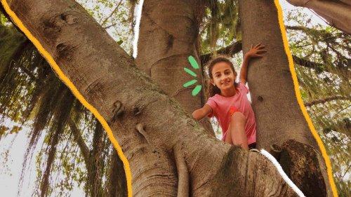 Rainforest Kids Challenge premia jovens protetores das florestas