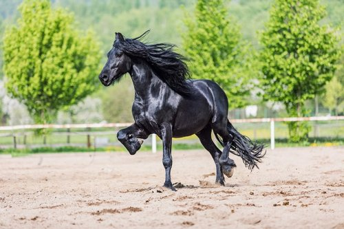 THE MOST EXPENSIVE HORSES IN THE WORLD