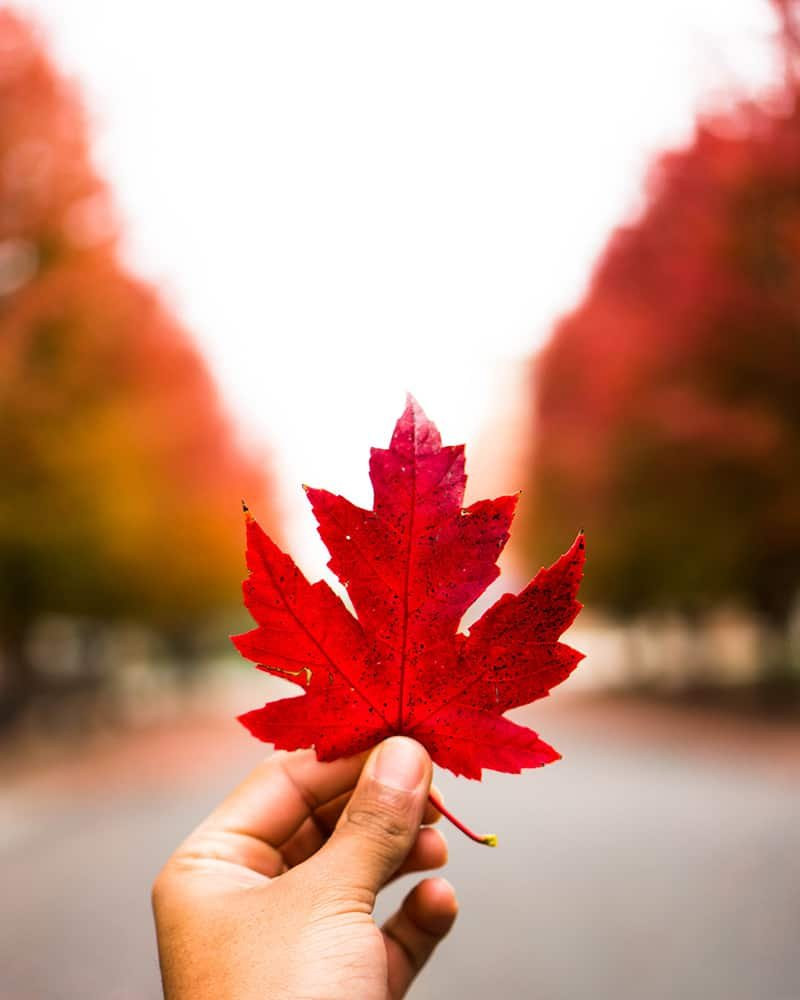 INSPIRING FALL QUOTES AND SAYINGS