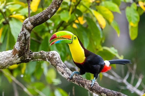 THE MOST EXPENSIVE BIRDS IN THE WORLD