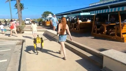 Hundreds on a Florida beach watched with amazement as a woman casually walked her $75,000 robot dog on a leash
