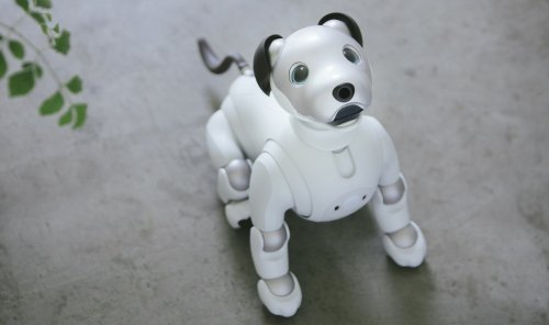 Fancy a robot dog? Sony's Aibo is coming to the US for $2900