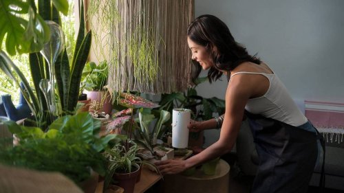 A new genre of luxury? Not a Birkin or Rolex, the ultra-rich Singaporeans are splurging almost $30,000 on a single house plant