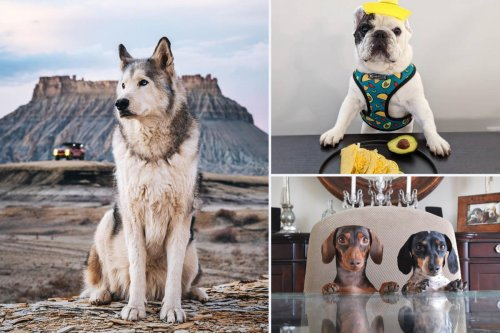 Cute, adorable and raking in the moolah. Topping at $373,000 a year, you will not believe the insane amounts of money the top 10 dog influencers on Instagram are making.