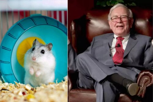 Not a math genius or a multi-billion dollar hedge fund but a Hamster from Germany has been trading crypto-currency and has outperformed Warren Buffet for months now.