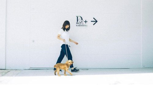 See it to believe it: A Japanese pet spa now offers exorcisms for dogs! : Luxurylaunches
