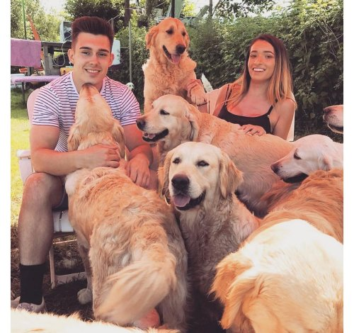 Pawsome Indeed! This tourist attraction in Somerset, UK lets you snuggle and play with super-friendly golden retrievers on a campsite