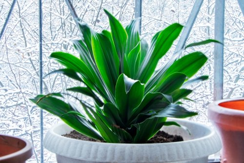 Fantastic foliage: The perfect low maintenance house plants for beginners