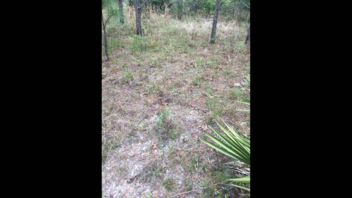 Can you find the Eastern diamondback rattlesnake in this Georgia photo? It's a big one