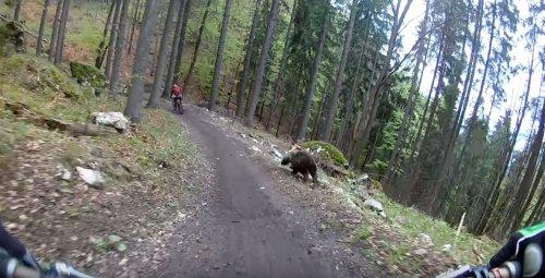 Tödliches Duell: Mountainbiker versucht, einem Bären zu entkommen
