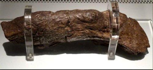 Längster menschlicher Kot in Museum ausgestellt