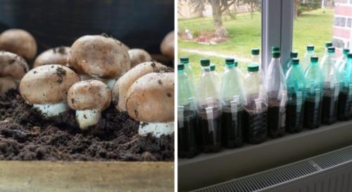 Voici comment faire pousser des champignons facilement dans une bouteille en plastique