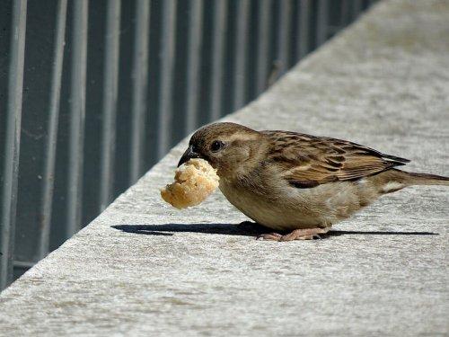 9 aliments toxiques à ne surtout pas donner aux oiseaux