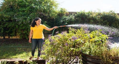 Faut-il plus arroser son jardin lorsqu'il fait chaud ?