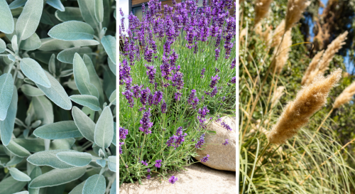 9 plantes à absolument adopter pour un joli jardin sec