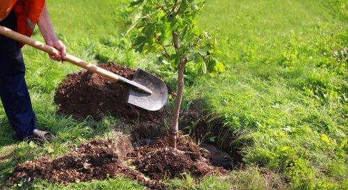 Planter un arbre dans son jardin : que dit la loi ?