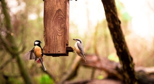 9 erreurs à éviter pour bien accueillir un oiseau au jardin