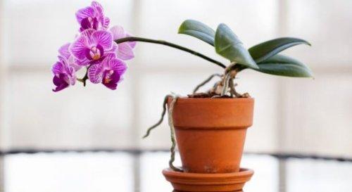 Nos conseils pour ne plus faire mourir son orchidée