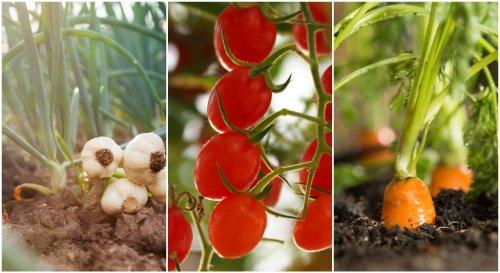 Les 9 légumes qui supportent la sécheresse en été