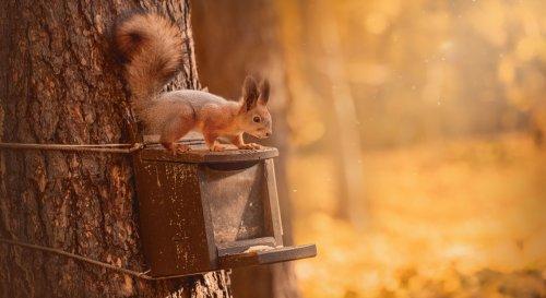Comment nourrir et protéger un écureuil au jardin ?