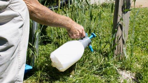 Désherber son jardin avec de l'eau de Javel, bonne ou mauvaise idée ?