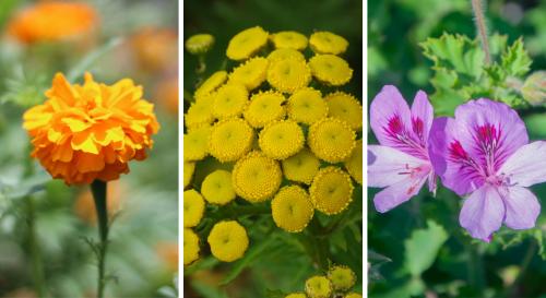9 plantes anti-insectes à avoir absolument au jardin