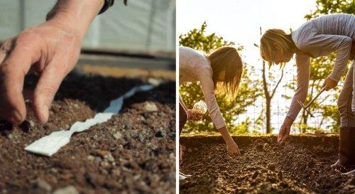 Et si vous semiez des graines avec… du papier toilette ?