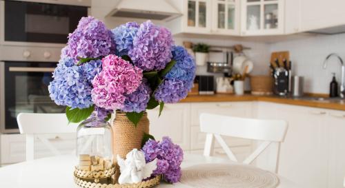 Découvrez la méthode miracle pour raviver vos fleurs d'hortensia fanées