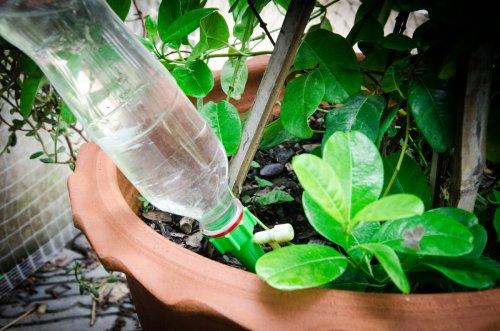 Comment arroser ses plantes avec une bouteille à l'envers ?