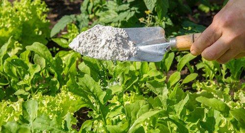 Terre de diatomée : comment bien l'utiliser au jardin ?