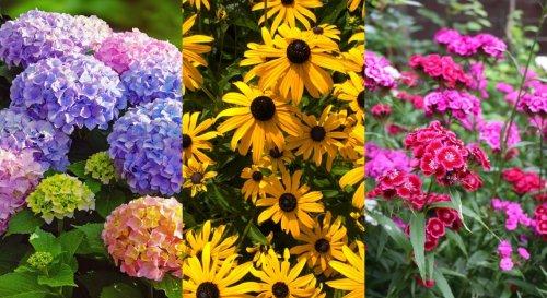 Quelles fleurs planter pour un massif fleuri tout l'été ?