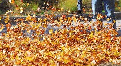 Lidl : son appareil à prix mini pour se débarrasser des feuilles mortes sans effort
