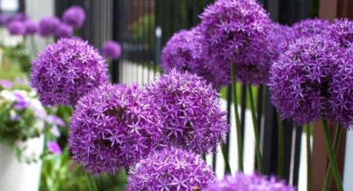 Les 9 plus belles plantes XXL à planter au jardin