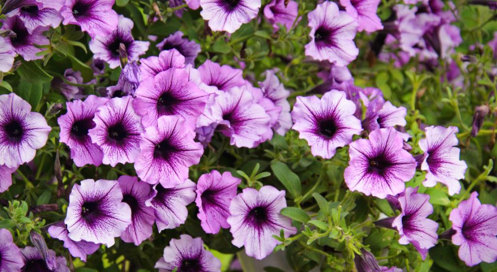 Plantes par Type - cover