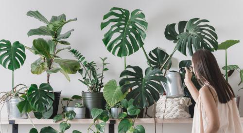 Comment avoir des plantes d'intérieur gratuitement ?