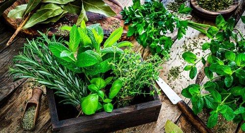Plantes aromatiques : les 9 variétés qui poussent en plein soleil