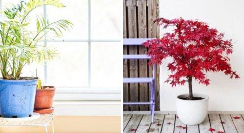 Quand peut-on sortir les plantes frileuses au printemps ?