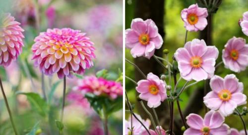 Fleurs d'automne : 12 variétés colorées !