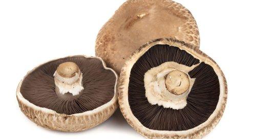 Où trouver des champignons portobello?