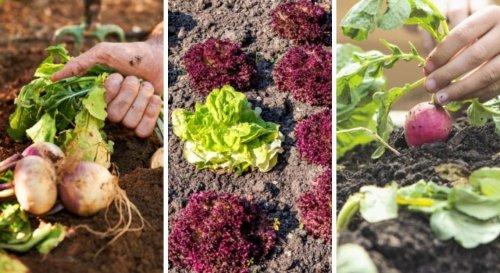 Légumes : 15 variétés qui poussent à l'ombre !
