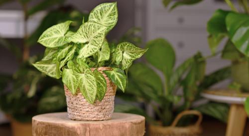 9 plantes d'intérieur à avoir chez soi cet hiver